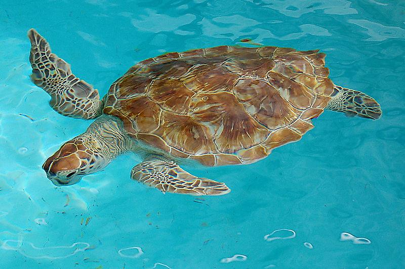 Turtle1_sm