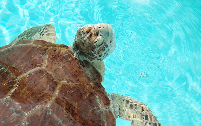 Turtle4_sm