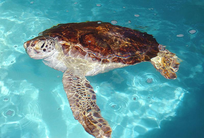 Turtle5_sm