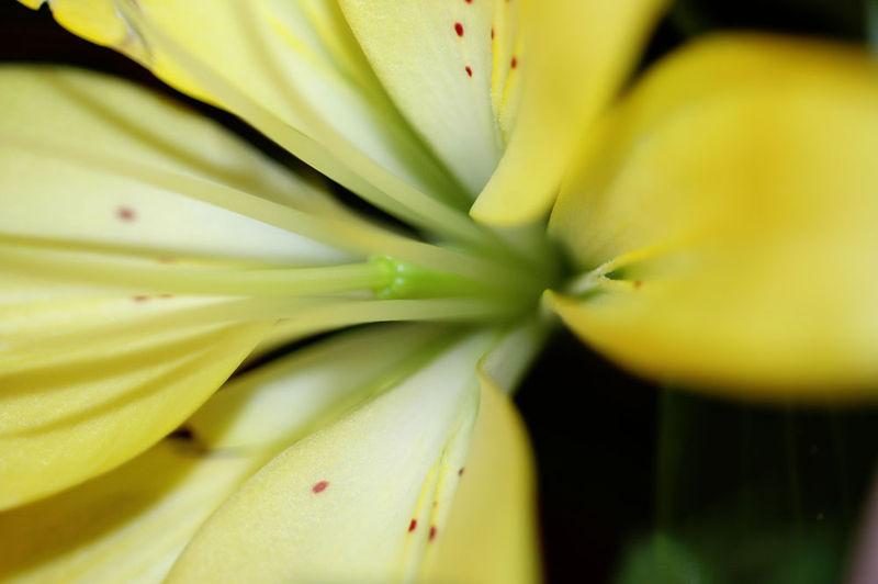 Closeup1