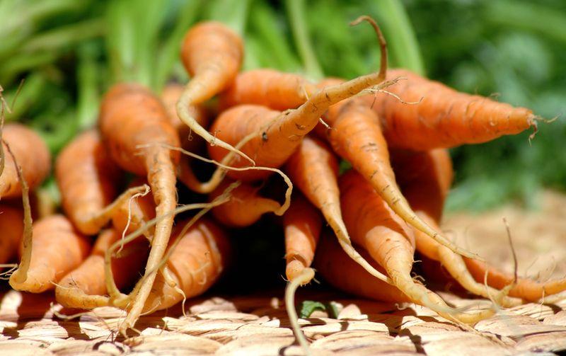 Carrots_sm
