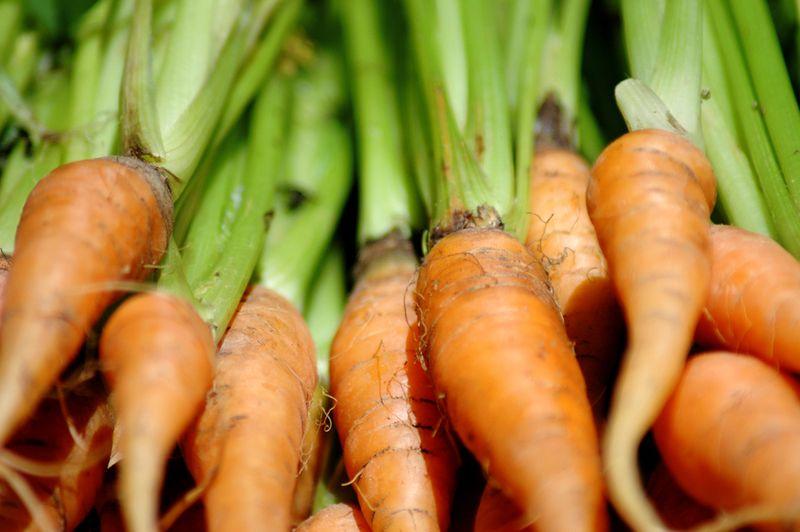 Carrots2_sm