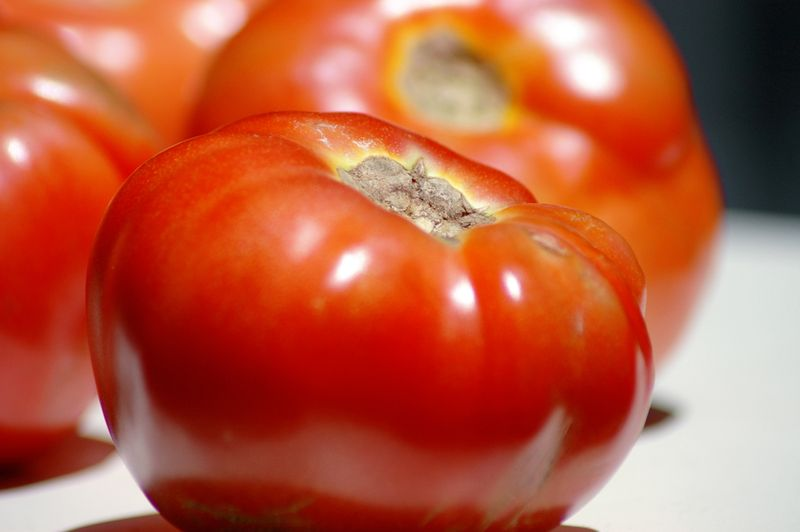 Tomatoes_sm
