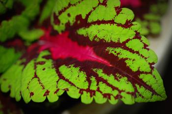 Leaf1_smaller